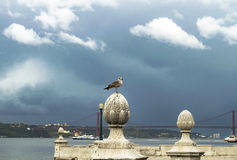 Seagull on the river. Seagull on the Tejo river Royalty Free Stock Photos