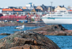 Seagull on a rock. Stock Photos