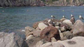 Seagull Rock Sea