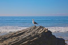 Seagull rock ocean Royalty Free Stock Photography