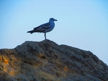 Seagull on a rock. Seascape - the seagull on the background of the sky Stock Images
