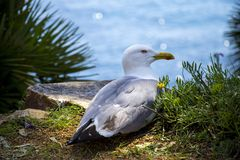 Seagull on a rock Royalty Free Stock Photos