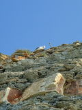 Seagull on a rock. Summer, August. South Ozereyevka, Novorossiysk, Russia. Stock Images
