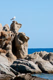 Seagull and rocks Stock Image