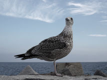 Seagull on rocks beside sea