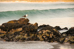 Seagull rocks sea Royalty Free Stock Images