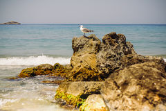 A seagull on the rocks by the sea. Typical seaside summer image. A white standing calm in front of the blue sea on a light breeze. Hot summer day on the beach stock image