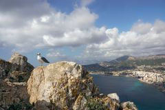 Seagull on the rocks on top of the mountain with a stunning sea view below.  stock photo