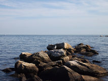 Seagull rocks on top rocks jettying into the ocean Royalty Free Stock Photography