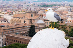 Seagull in roma Royalty Free Stock Photography