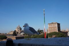 Seagull in Rome city stock photo