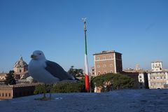 Seagull in Rome city stock image