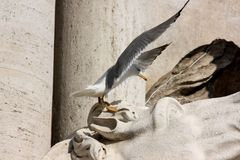 Seagull in Rome, Italy stock photos