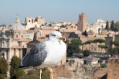 Seagull and Rome Italy cityscape Stock Photo