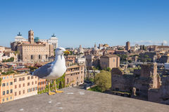 Seagull with Rome skyline in background Royalty Free Stock Images