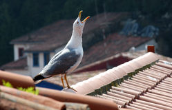 Seagull on a roof stock photography