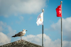 Seagull on the roof Stock Photography