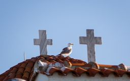 Seagull on the roof of a small church, standing between two crosses stock photos
