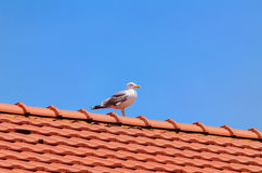 Seagull on the Roof Stock Photos