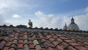 Seagull on rooftop, Rome, Italy. Seagull perched atop red tile rooftop against blue skies in Rome, Italy with architectural dome Stock Image