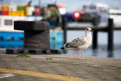 Seagull and rusty bollard Stock Photo