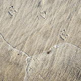 Seagull's foot in the sand Stock Image