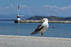 Seagull`s freedom Stock Photo