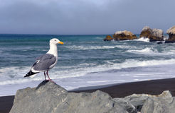 Seagull's View, Rockaway Beach, Pacifica California Stock Photos