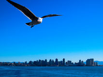Seagull in San Diego. Seagull against the San Diego skyline stock images