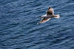 Seagull. In San Sebastian, Spain Royalty Free Stock Image