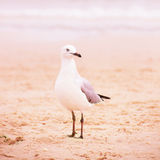 Seagull on  sand on the beach Stock Image