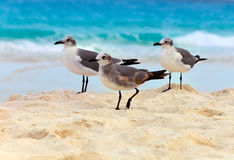 Seagull on sand Royalty Free Stock Photography