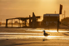 Seagull on a sandy beach shoreline at sunset scenic landscape Royalty Free Stock Photos