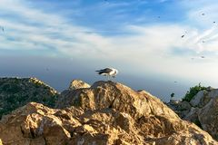 A seagull sat placidly and grooming on top of a rock in the Peñon de Ifach. Photography made in Calpe, Alicante, Spain stock photos