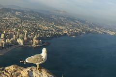 A seagull sat placidly and looking at the photographer with a skyscraper in the background in the Peñon de Ifach. Photography made in Calpe, Alicante, Spain royalty free stock photo