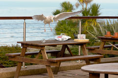 Seagull scavenging for food on plate Stock Photo