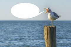 Seagull screaming on a wooden column royalty free stock image