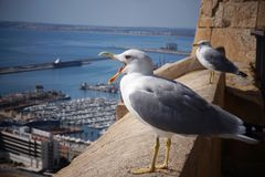 The seagull screams on the edge of the fortress near the sea town. Royalty Free Stock Image