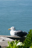 Seagull by the sea Stock Photography