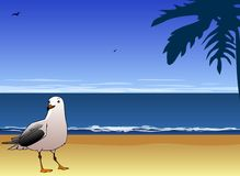 Seagull and sea Stock Images