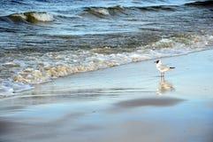 Beach sea and seagull Stock Photos