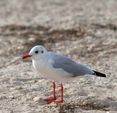 Seagull on sea beach at sun day Royalty Free Stock Photo