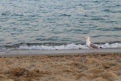 Seagull on the sea beach Stock Photos