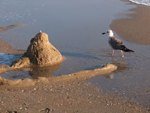 Seagull and the sea Stock Image