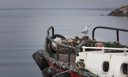 Seagull, sea and fisher boat Royalty Free Stock Images
