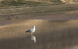 Seagull on sea front Royalty Free Stock Photos