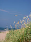 Seagull and Sea grass. A photograph of a seagull flying over the beach and sea grass Stock Photo