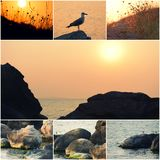 Seagull by the sea, sea surface at sunset, stones on the coast Collage of photos copyspace on sunset sky in center Royalty Free Stock Images