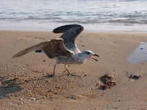 Seagull and the sea Stock Photography