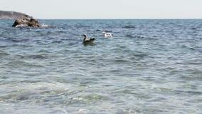 Seagull on sea water Stock Photos